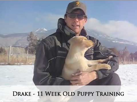 Drake - 11 Week Old Puppy Training